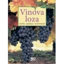 Vinova loza - uzgoj